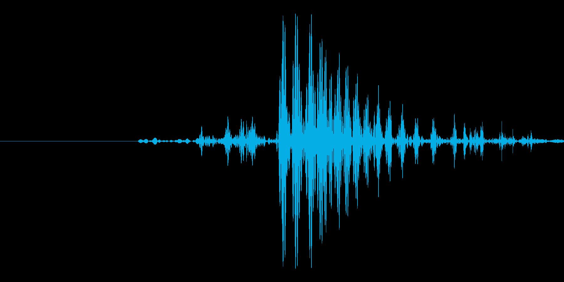 ゴクッ。人・動物が飲み込むときの喉の音の再生済みの波形