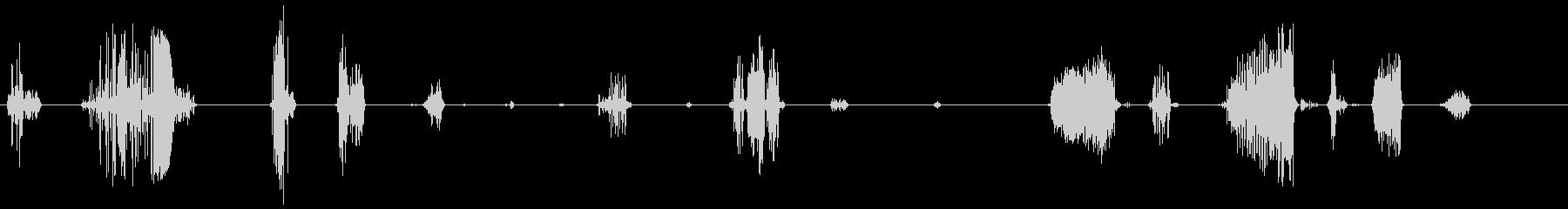 ラマ・ギャグ、スクリーチ。鼻音と甲...の未再生の波形