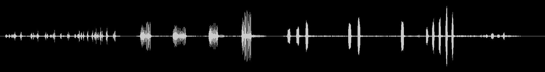 URRACA-カラスの未再生の波形