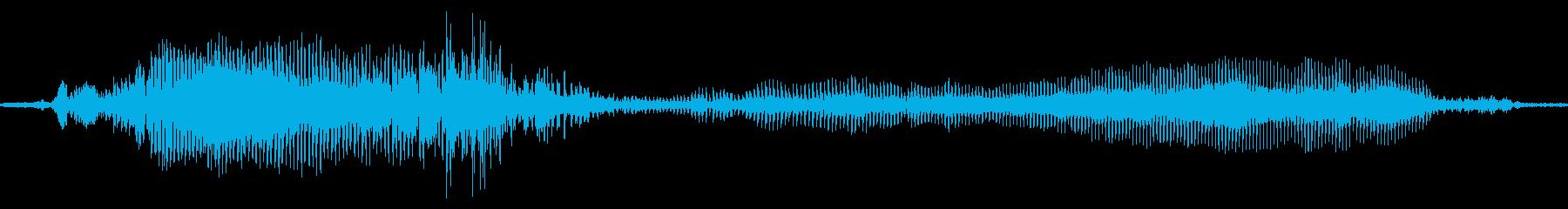 グロアザラシ、アシカ、セイウチの再生済みの波形