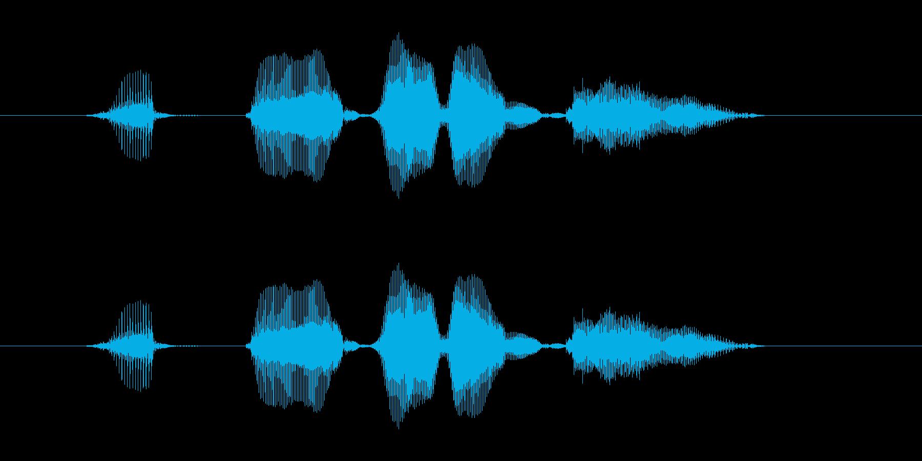 【行事・イベント・挨拶】はっぴーばれん…の再生済みの波形