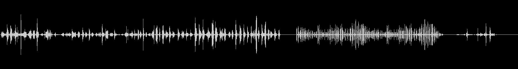 アライグマアライグマ赤ちゃん、大人...の未再生の波形