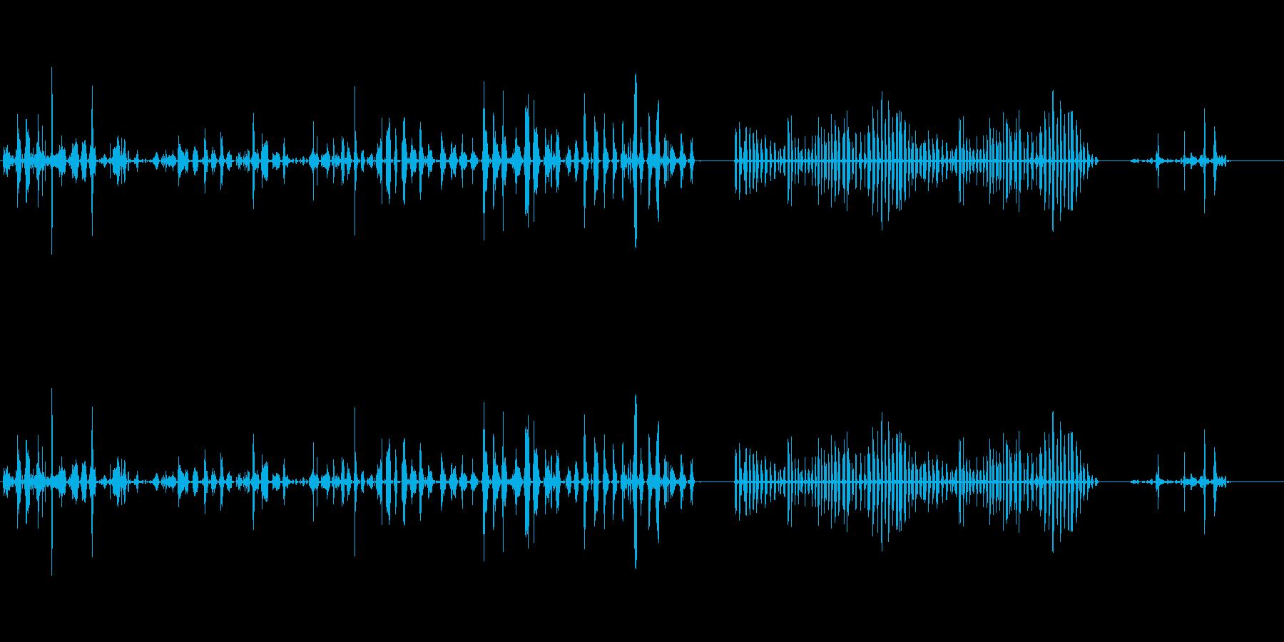 アライグマアライグマ赤ちゃん、大人...の再生済みの波形