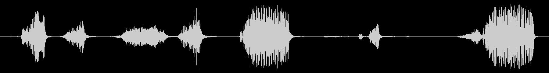 オウム:さまざまなケージのオウムと...の未再生の波形