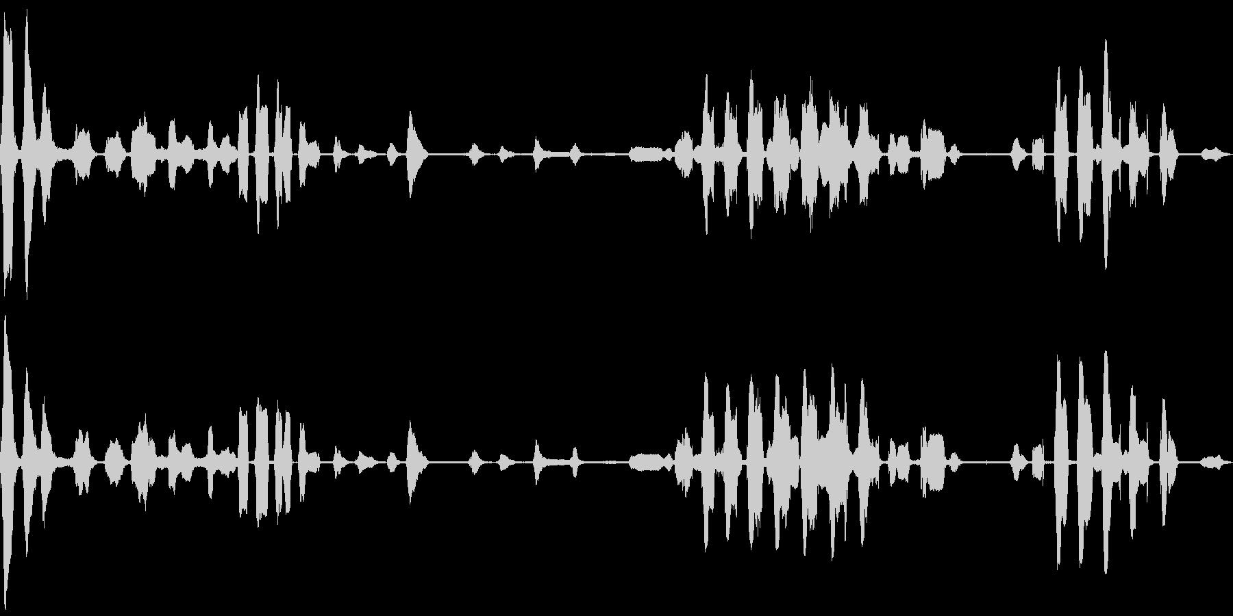 ウミネコの鳴き声(ミャアミャア)の未再生の波形