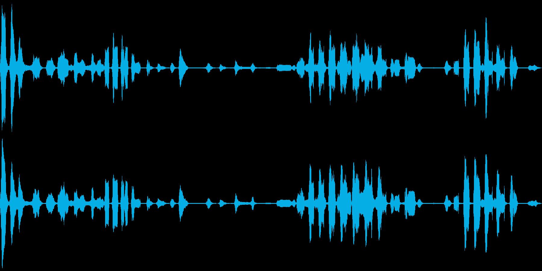 ウミネコの鳴き声(ミャアミャア)の再生済みの波形