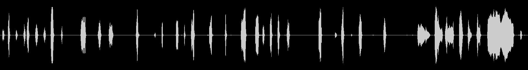 さまざまなラクダのうなり声とうめきの未再生の波形