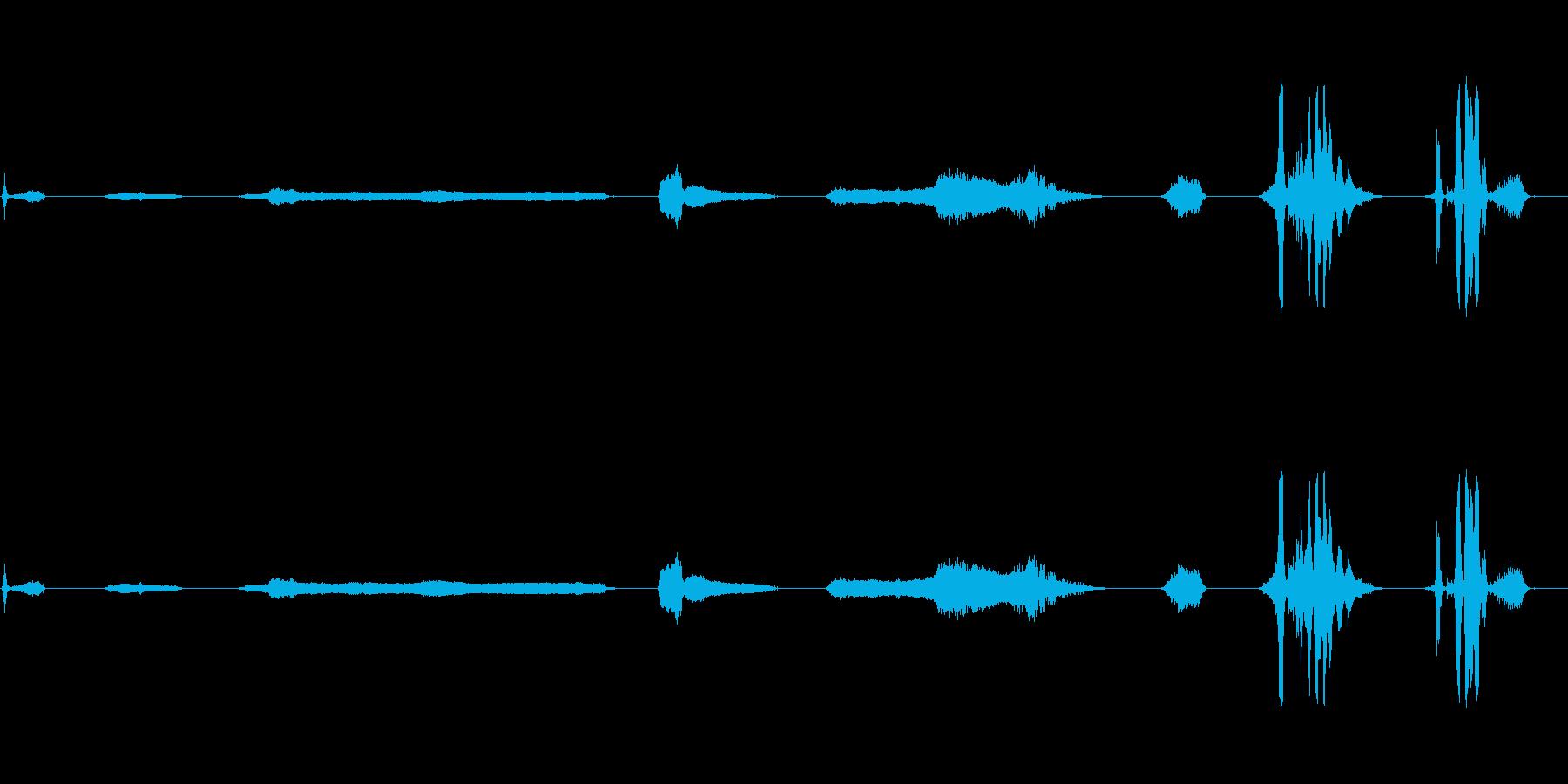 8怒っているスナール&ヒス、動物の再生済みの波形