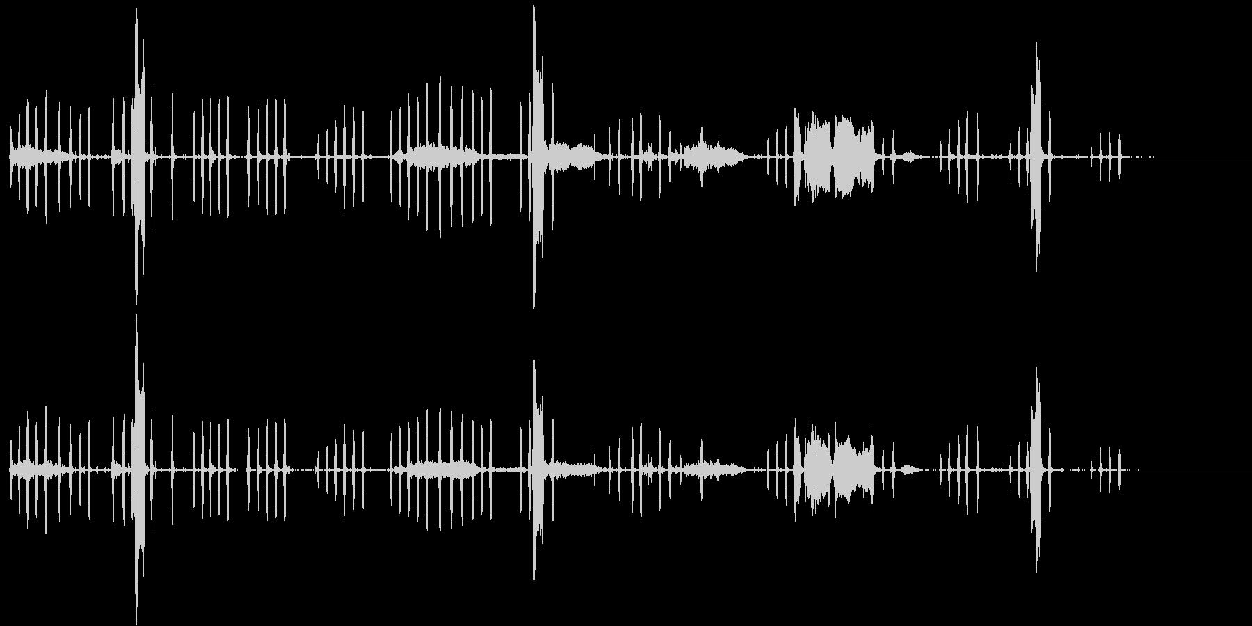 ニワトリの鳴き声、カラス。オンドリ...の未再生の波形