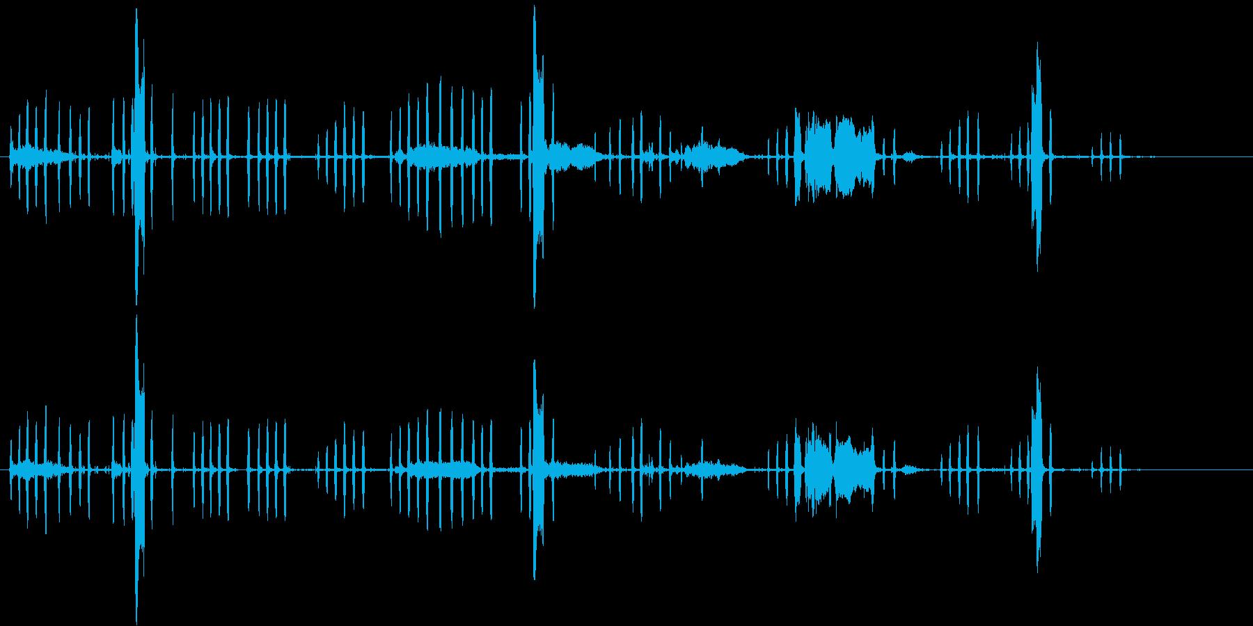 ニワトリの鳴き声、カラス。オンドリ...の再生済みの波形