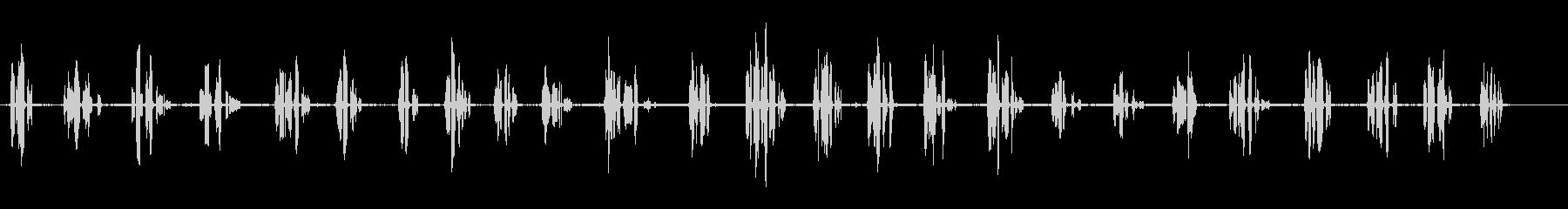 クロウタドリ-近く-鳥の未再生の波形