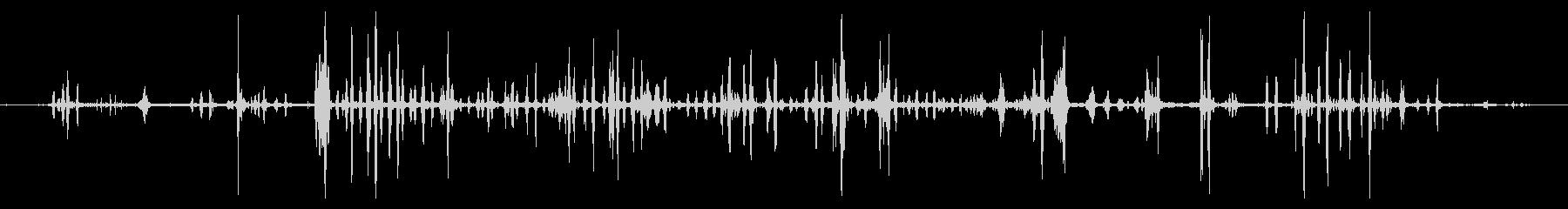アヒルと鳥の小グループ:静かなチャ...の未再生の波形