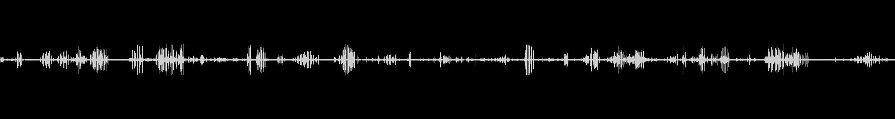 鳥カモメスコーク鳴き声クアの未再生の波形