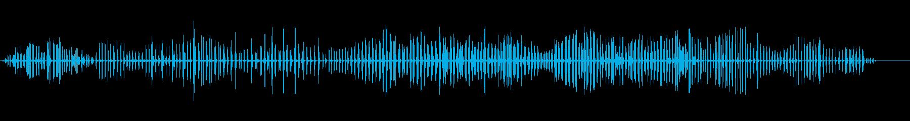 杖のウグイス-アクロセファラスシラケウスの再生済みの波形