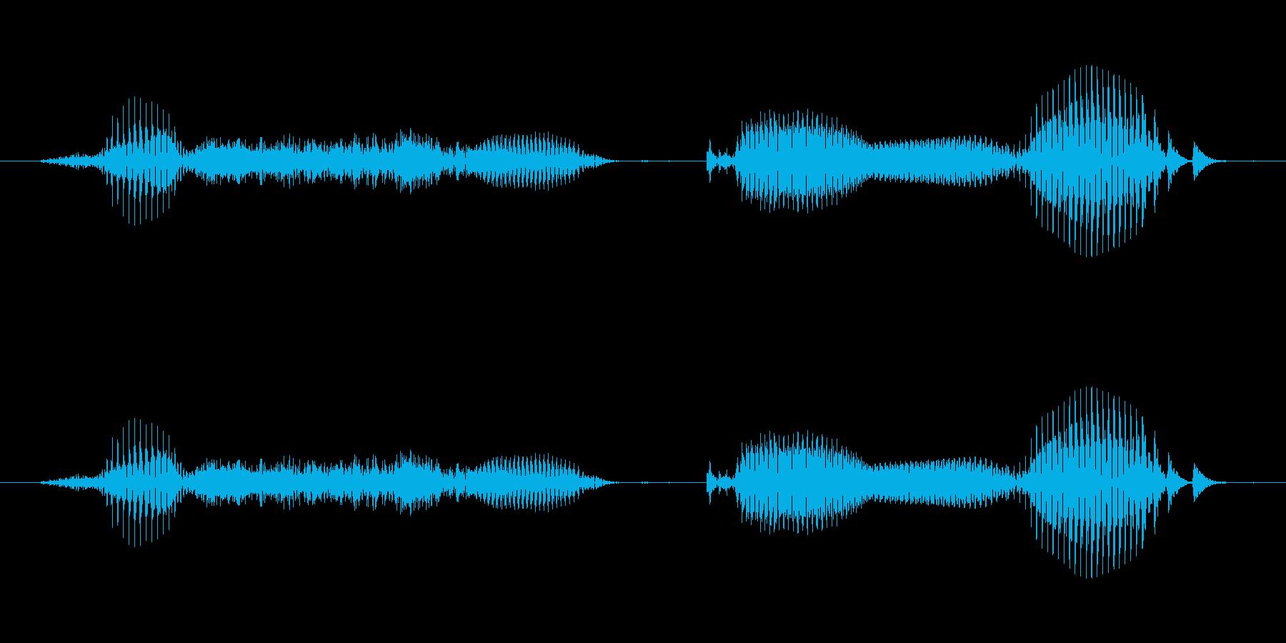 【日数・後】8週間後 (はっ)の再生済みの波形