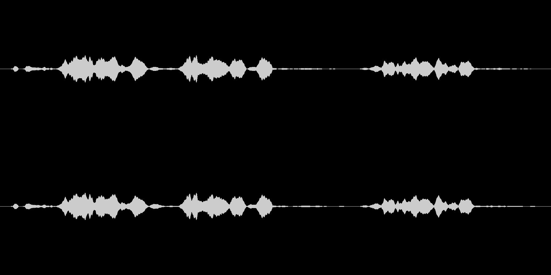 ピーピヨ♪大瑠璃、おおるりの鳴き声02の未再生の波形