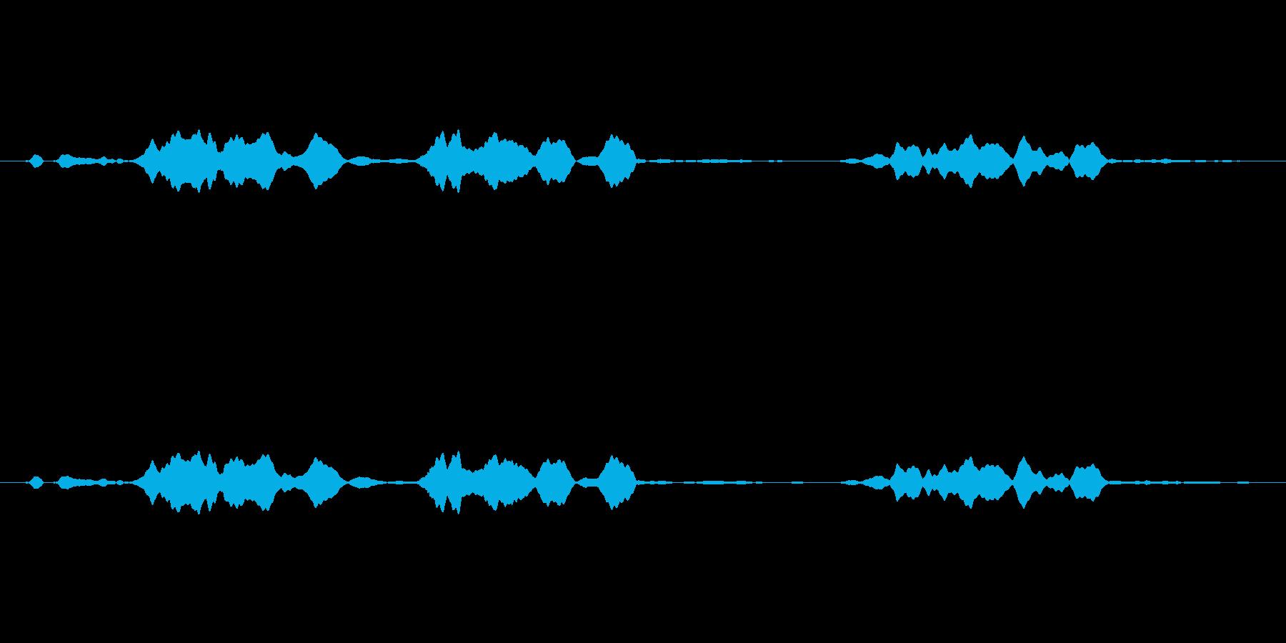 ピーピヨ♪大瑠璃、おおるりの鳴き声02の再生済みの波形