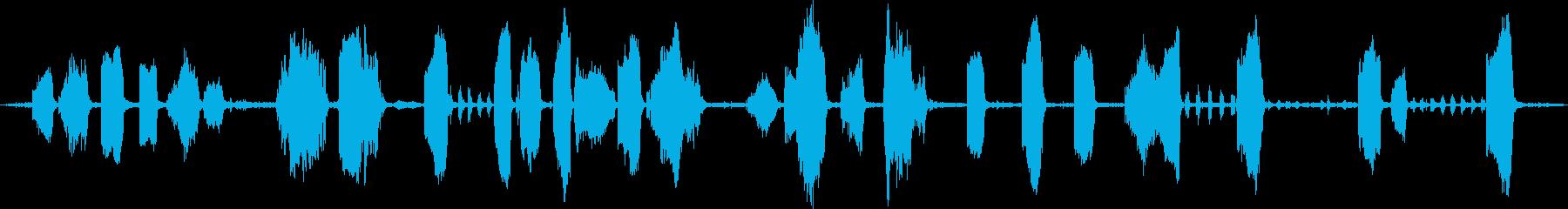 オットセイ:グループスイミングと発...の再生済みの波形