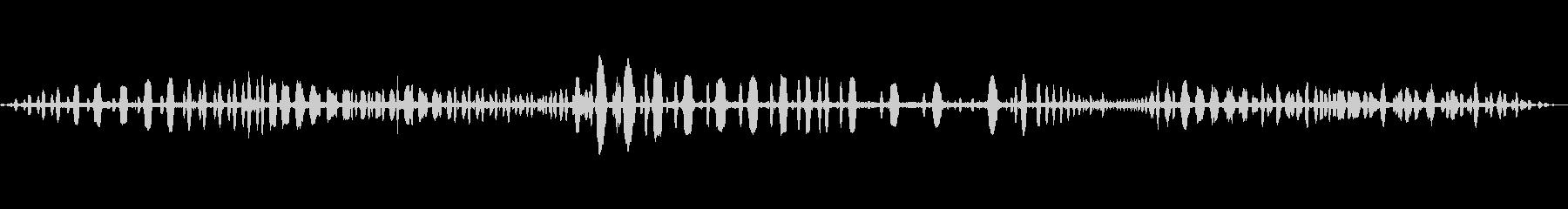 海鳥のさえずりの未再生の波形