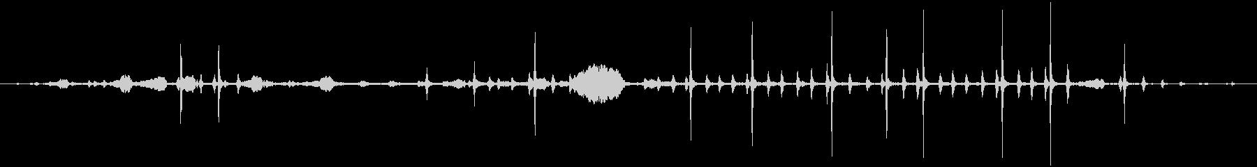 ケージ0-20の熱帯の鳥の未再生の波形