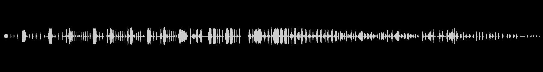 歌う、動物の鳥の未再生の波形