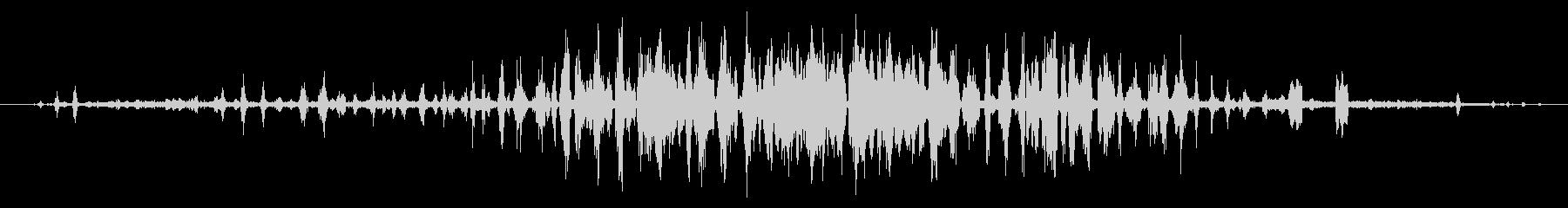 フラミンゴのグループ:チャタリングの未再生の波形