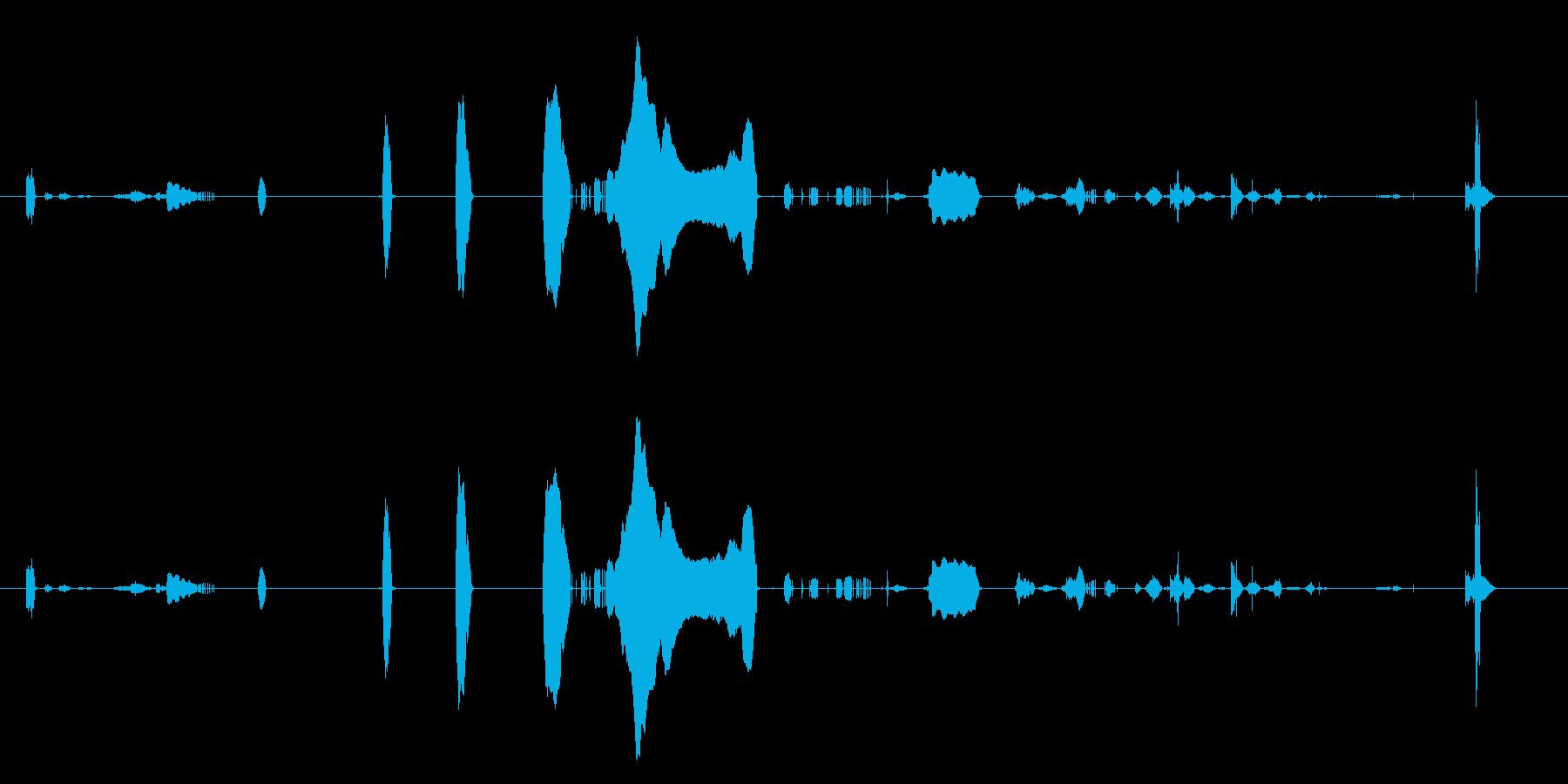 赤ちゃんの泣き声とくしゃみの再生済みの波形