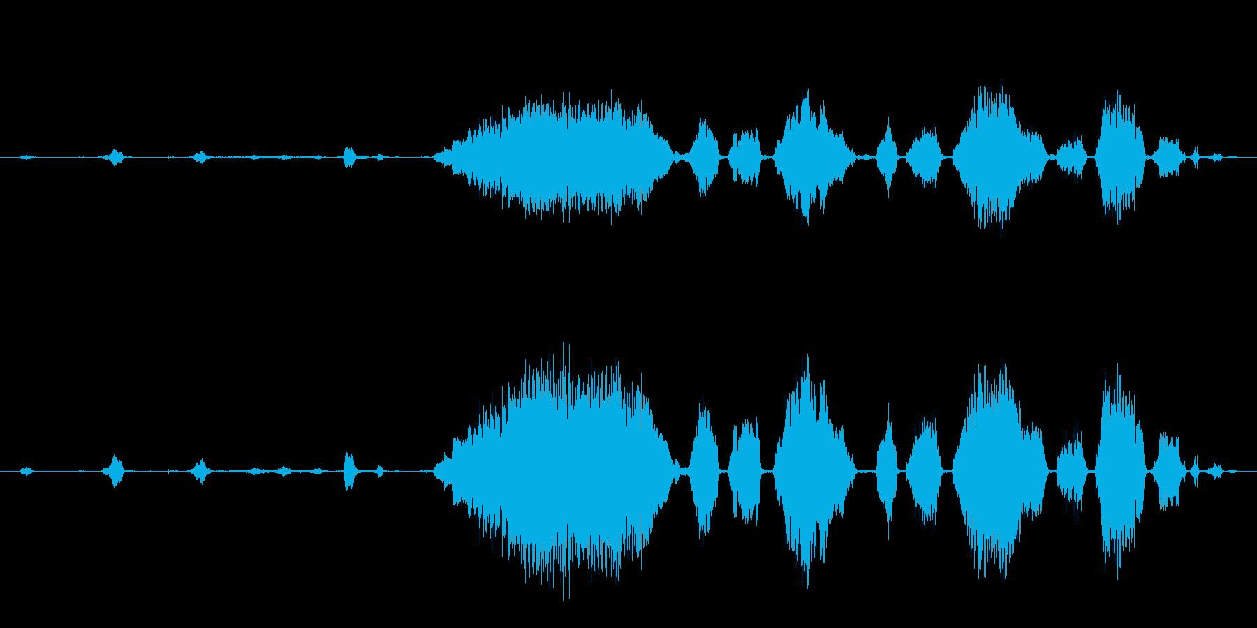 ロバ 泣く03の再生済みの波形