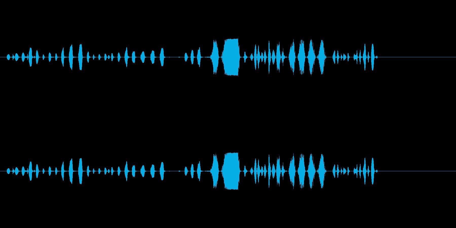 チャタリングとスクリーチ、動物、A...の再生済みの波形