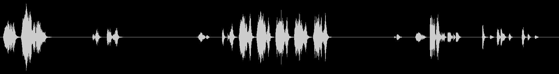 オウム:短いおしゃべり、軽い声の未再生の波形