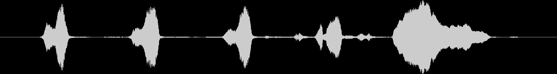 アフリカ灰色のオウム:発声フレーズ...の未再生の波形