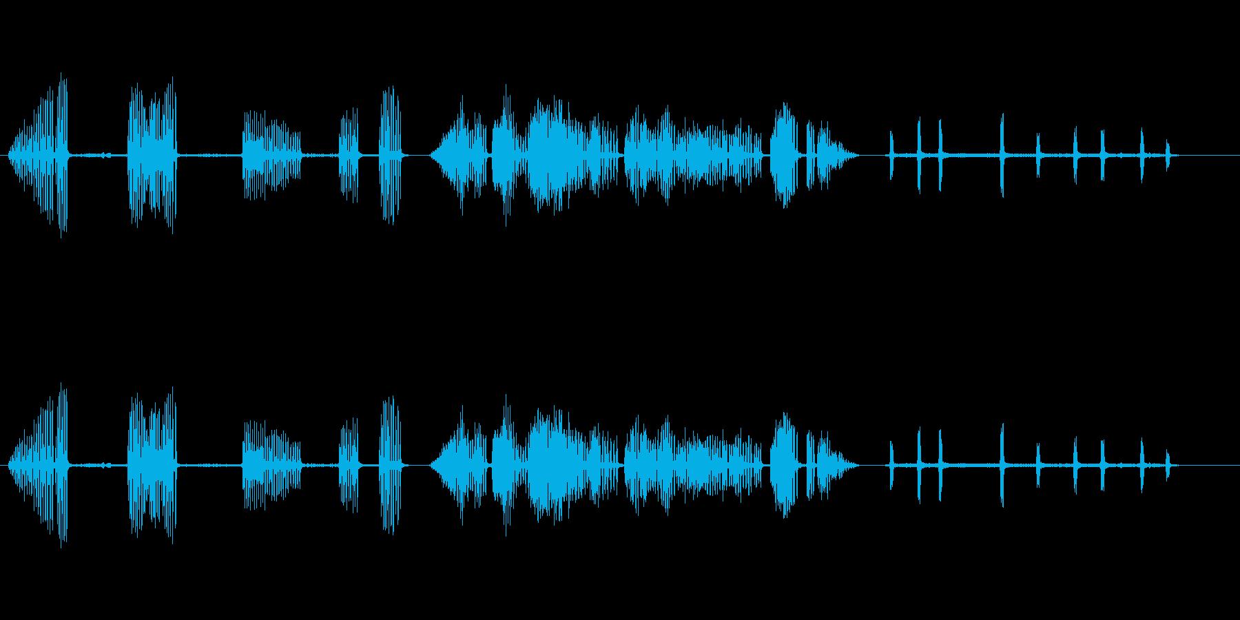 カササギ1の再生済みの波形