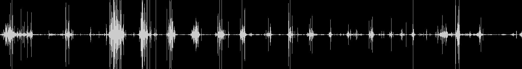 骨を食べるガリガリ、コリッという音の未再生の波形