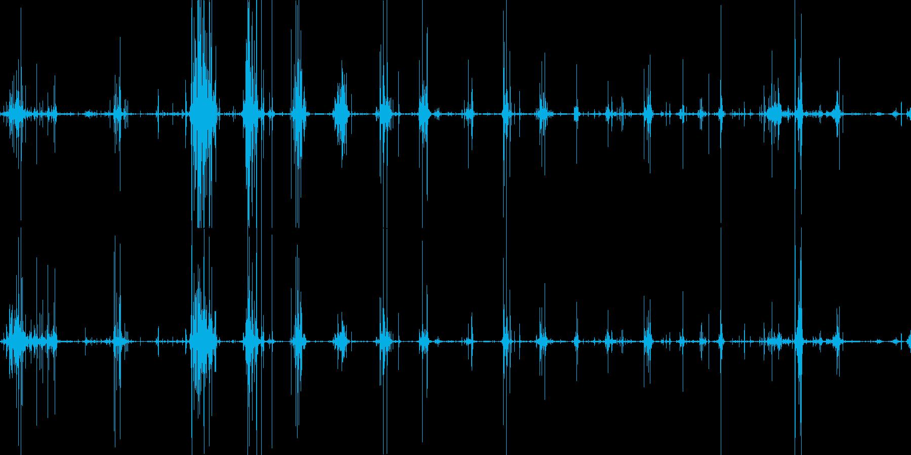 骨を食べるガリガリ、コリッという音の再生済みの波形