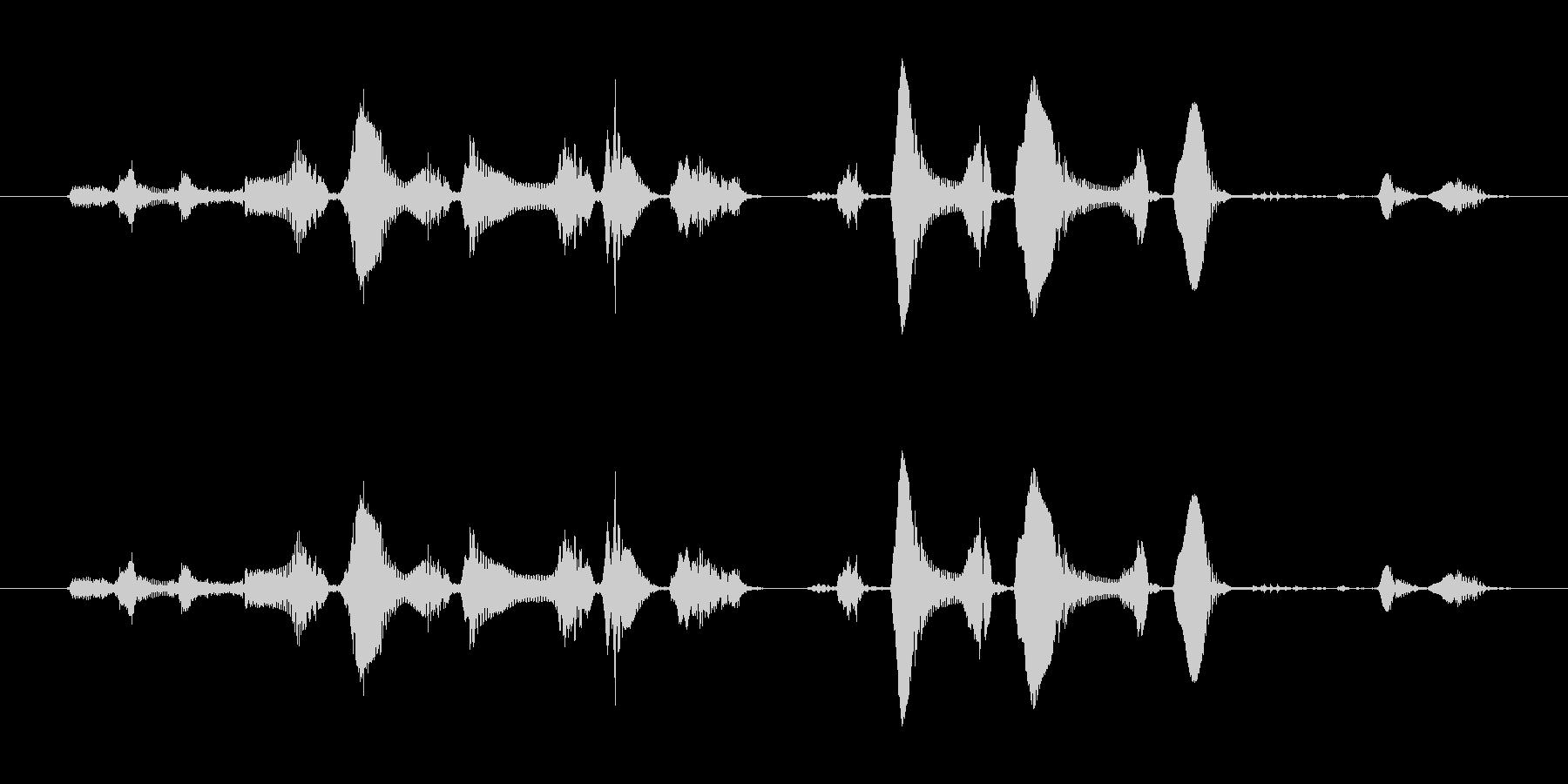 笑い声 - 4~5歳 女の子 - 32_の未再生の波形