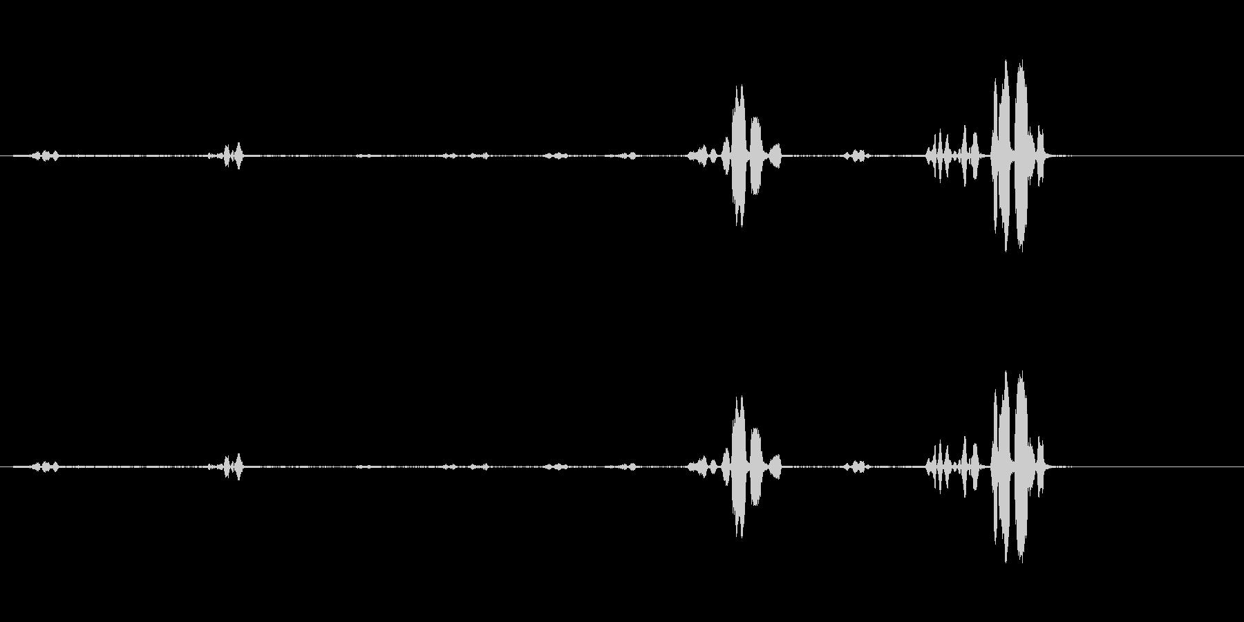 オウム-話す-スウェーデン語-鳥1の未再生の波形