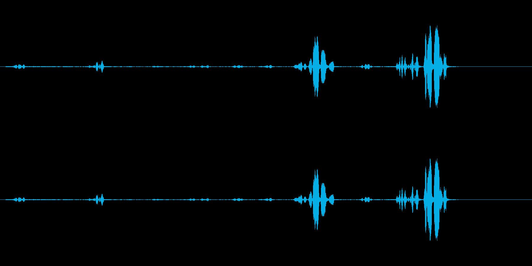 オウム-話す-スウェーデン語-鳥1の再生済みの波形