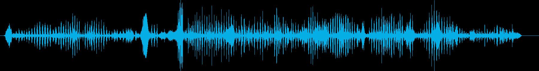 アザラシ、ケープファーバークス。バ...の再生済みの波形