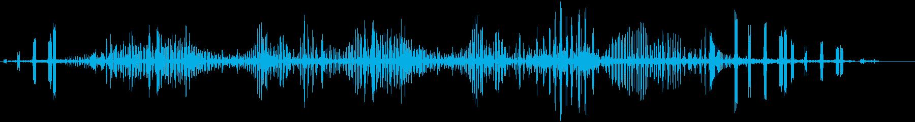 ミヤコドリの再生済みの波形