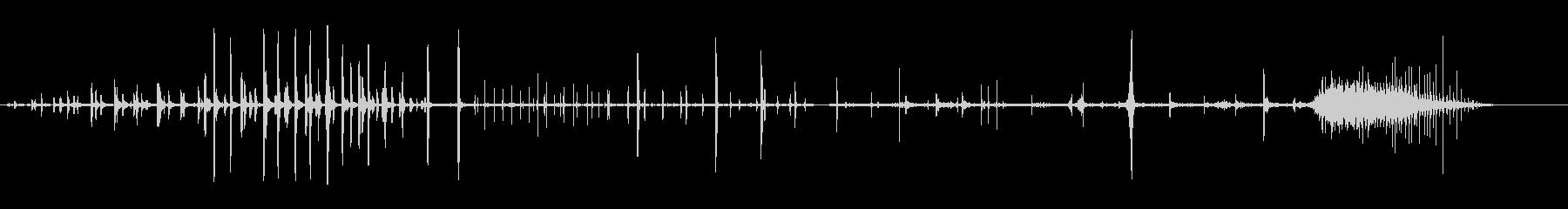 オオバンの未再生の波形