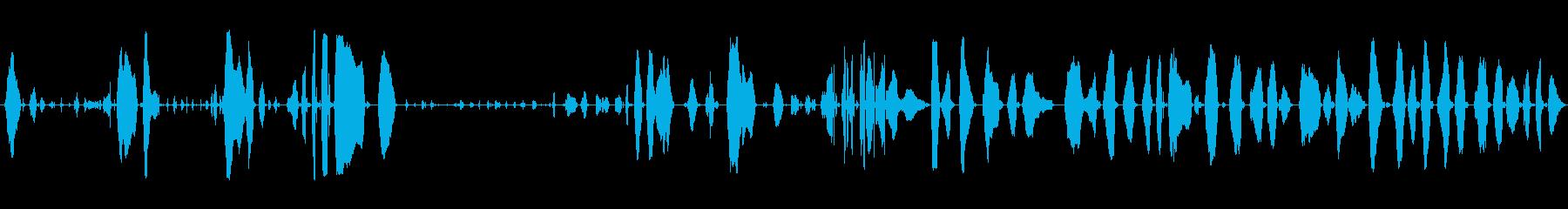 子供の泣き声、6週間前、人間; D...の再生済みの波形