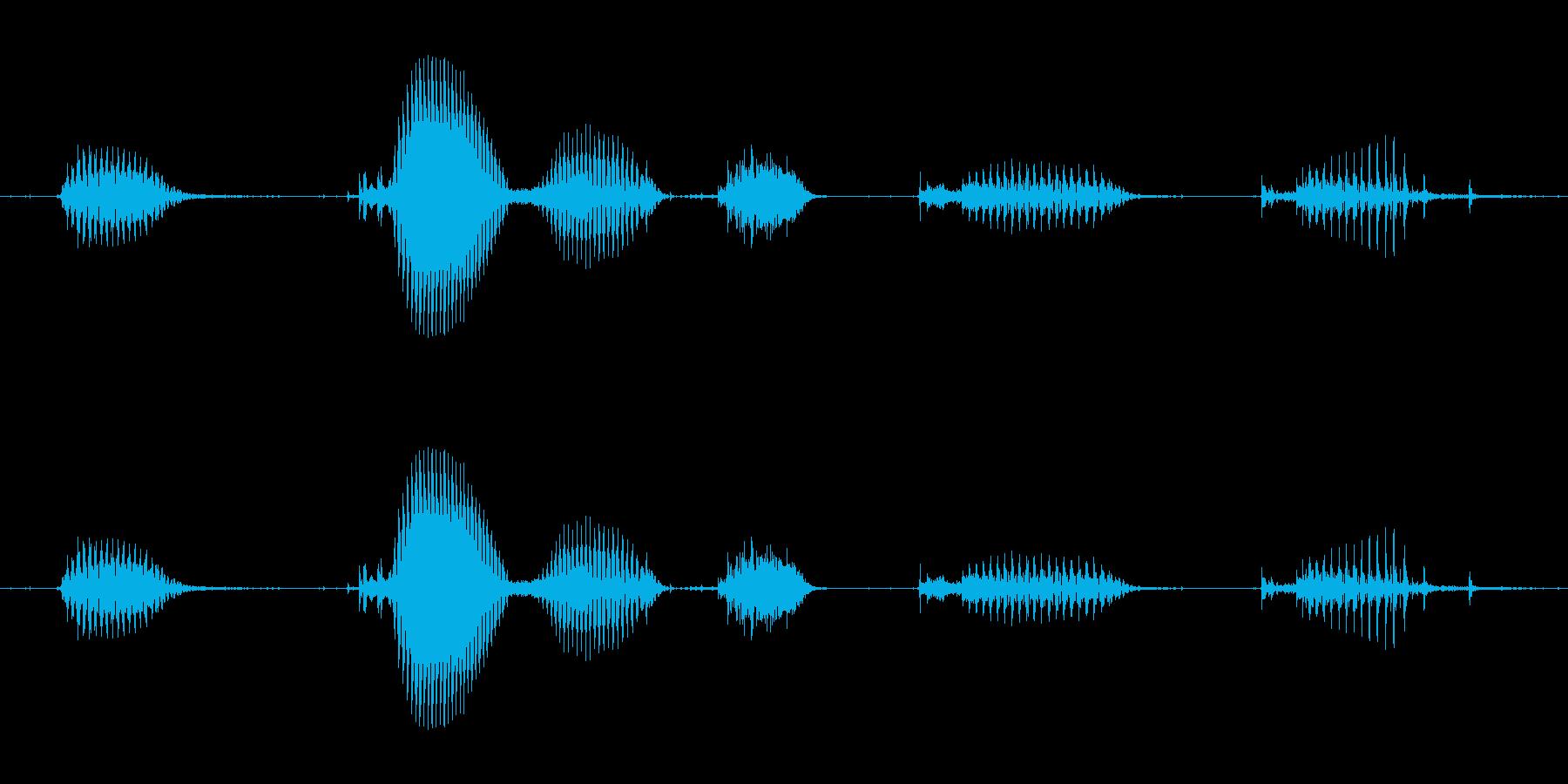 【日数・経過】1ヶ月経過の再生済みの波形