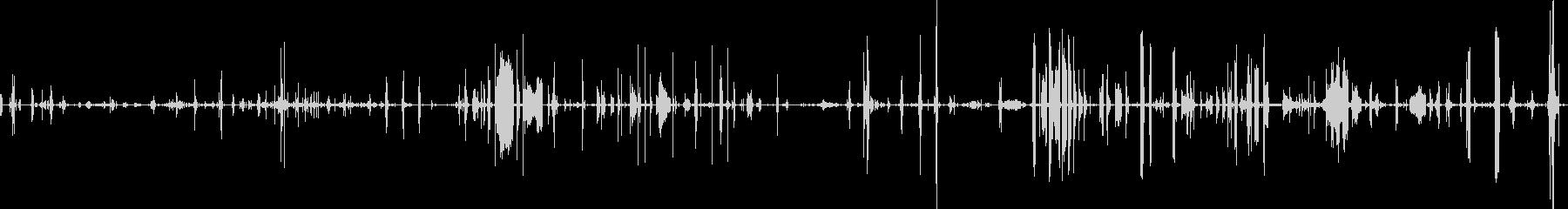 鳥のカナリーチャープフラッターフラップの未再生の波形