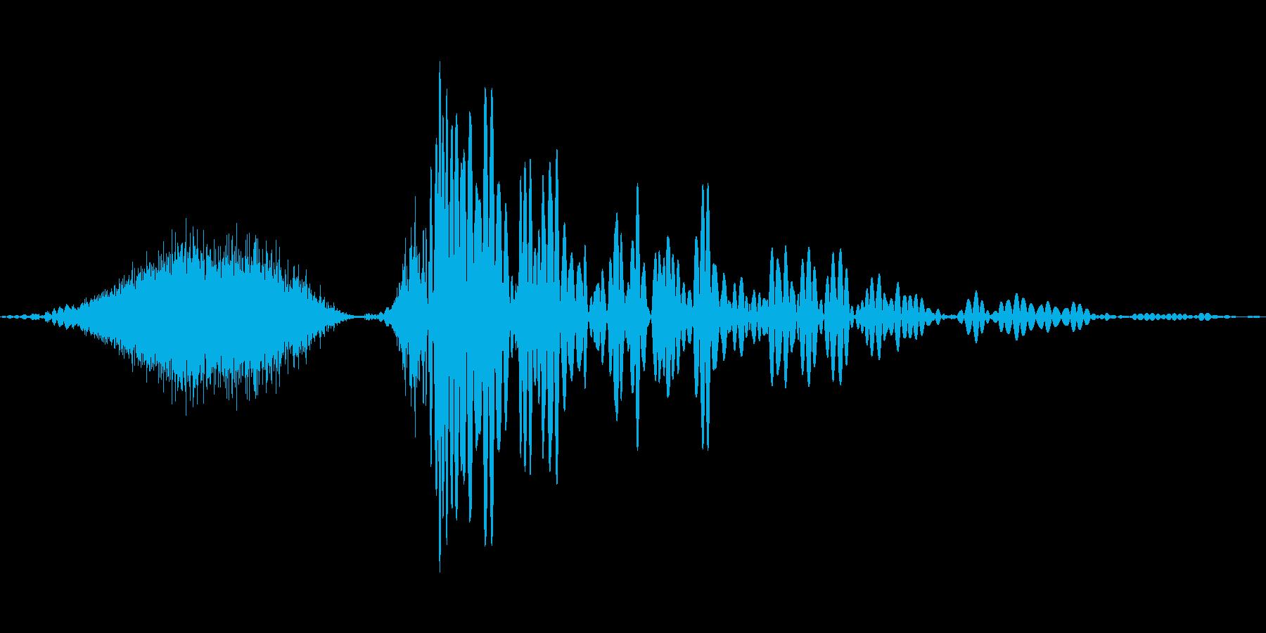 北極の蝶、フィズサブヒット。 6チ...の再生済みの波形