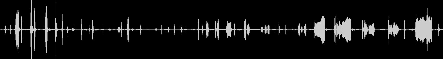 ラクダ悲しいうめき声の未再生の波形