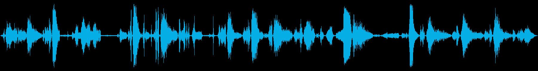 いくつかの鳴き声とうなり声、猫ワイ...の再生済みの波形