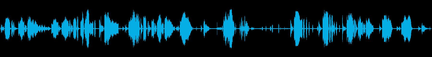 幼児泣きの再生済みの波形