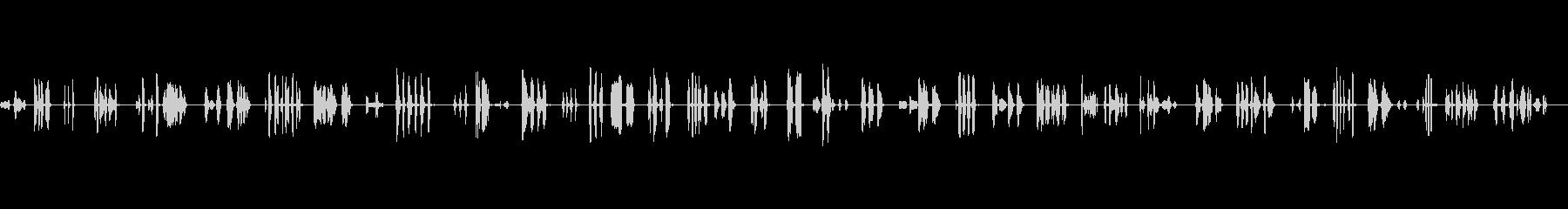 歌、動物の鳥の未再生の波形