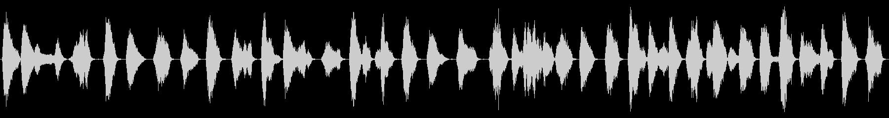 モッキンバードチックス:呼び出し、鳥の未再生の波形