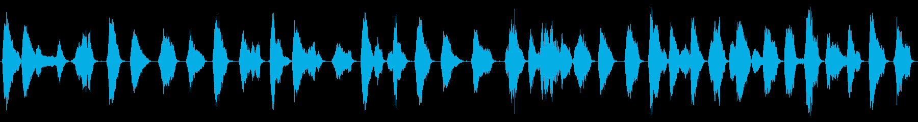 モッキンバードチックス:呼び出し、鳥の再生済みの波形